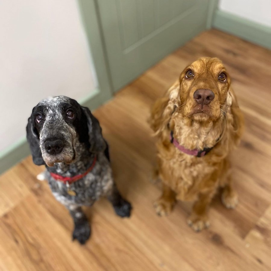 Poppy & Lilo waiting for their treats!